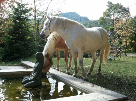 arcadia-horses