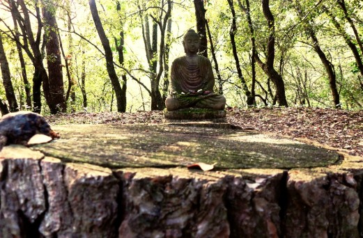 Buda piedra 1